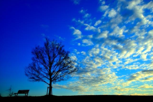 幻想的な木