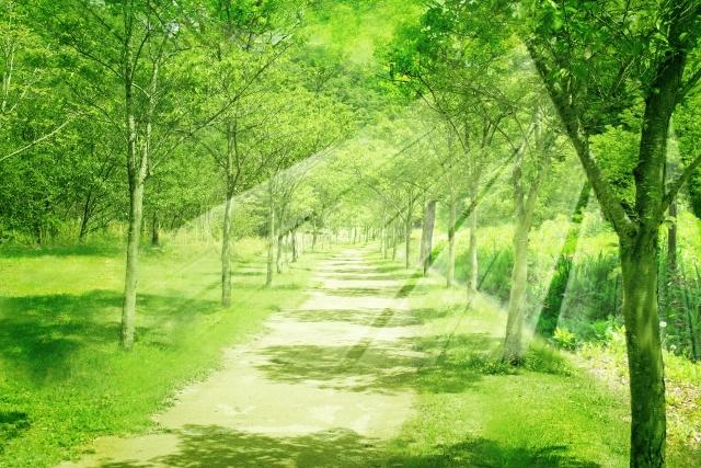 自然と小道