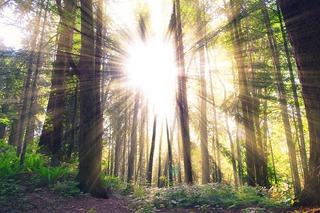 forest-984413_640.jpg